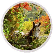 Round Beach Towel featuring the photograph Are You My Friend? by Jeff Folger