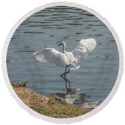 Are You Ready To Dance - Great Egret In Mtn View Ca Round Beach Towel