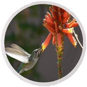 Arizona Hummingbird Drinking Aloe Nectar Round Beach Towel