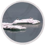 Arctic Terns On A Bergy Bit Round Beach Towel