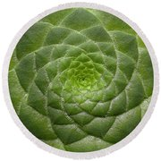 Artistic Nature Green Aeonium Cactus Macro Photo 203 Round Beach Towel