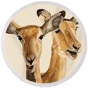 Impalas Round Beach Towel