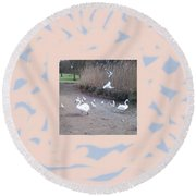 Swans 4 Round Beach Towel