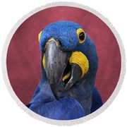 Cheeky Macaw Round Beach Towel