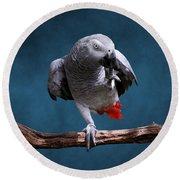 Secretive Gray Parrot Round Beach Towel