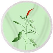 Hot Chili Pepper Plant Botanical Illustration Round Beach Towel