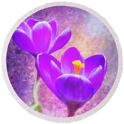 Our First Crocuses This Spring Round Beach Towel