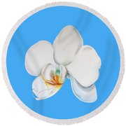 Round Beach Towel featuring the painting White Orchid by Elizabeth Lock