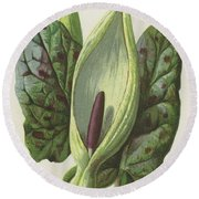 Arum, Cuckoo Pint Round Beach Towel by Frederick Edward Hulme