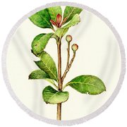 As The Twig Is Bent The Tree Inclines. Round Beach Towel by Heidi Kriel