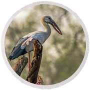 Asian Openbill Round Beach Towel