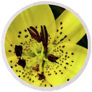 Asiatic Lily Round Beach Towel