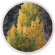 Aspen Tree Fall Colors Co Round Beach Towel