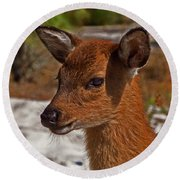 Assateague Island Sika Deer Fawn Round Beach Towel