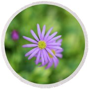 Round Beach Towel featuring the photograph Pilliga Daisy by Tim Gainey
