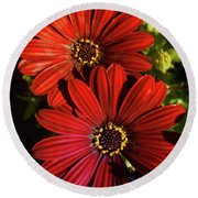 Aster Coming Out Of The Dark Round Beach Towel