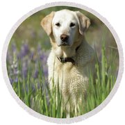 Round Beach Towel featuring the photograph At Attention by Jim and Emily Bush