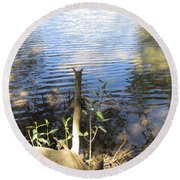 Round Beach Towel featuring the photograph At Mangroves Edge by Dianne  Connolly