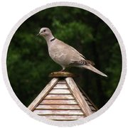 At The Top Of The Bird Feeder Round Beach Towel by Donna Brown