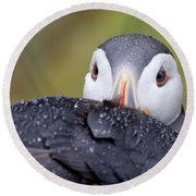 Atlantic Puffin With Rain Drops Round Beach Towel
