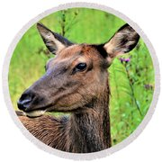 Attentive Yearling Round Beach Towel