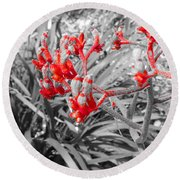 Australian Kangaroo Paws In Kings Park - Perth Round Beach Towel