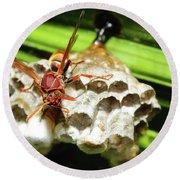 Australian Papper Wasp 772 Round Beach Towel