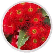 Australian Red Eucalyptus Flowers Round Beach Towel