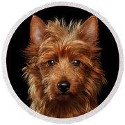 Australian Terrier Round Beach Towel by Sergey Taran