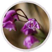 Australia's Native Orchid Small Dendrobium Round Beach Towel