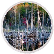 Autumn At Moosehead Bog Round Beach Towel