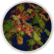 Round Beach Towel featuring the photograph Autumn Berries by RKAB Works