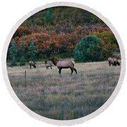 Autumn Bull Elk Round Beach Towel