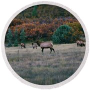 Autumn Bull Elk Round Beach Towel
