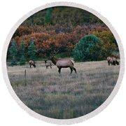 Autumn Bull Elk Round Beach Towel by Jason Coward