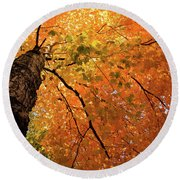 Autumn Canopy In Maine Round Beach Towel