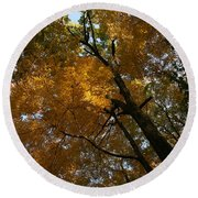 Round Beach Towel featuring the photograph Autumn Canopy by Shari Jardina