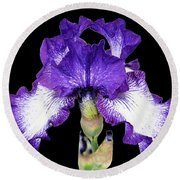 Autumn Circus Iris Round Beach Towel