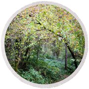 Autumn Colors In The Forest Round Beach Towel