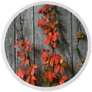 Round Beach Towel featuring the photograph Autumn Creepers by William Selander