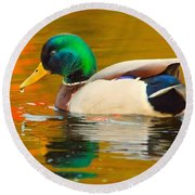 Autumn Duck Round Beach Towel