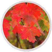 Round Beach Towel featuring the photograph Autumn Flash by Bryan Carter