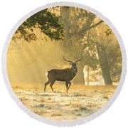 Round Beach Towel featuring the photograph Autumn Frost by Scott Carruthers