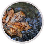 Round Beach Towel featuring the photograph Autumn Leaf by Debra and Dave Vanderlaan