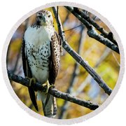 Autumn Red-tailed Hawk Round Beach Towel