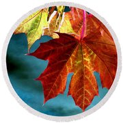 Round Beach Towel featuring the photograph Autumn Regalia by Will Borden