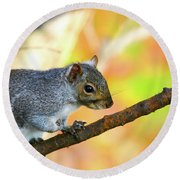 Round Beach Towel featuring the photograph Autumn Squirrel by Karol Livote