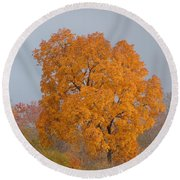 Autumn Tree Round Beach Towel by Donald C Morgan