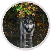 Round Beach Towel featuring the photograph Autumn Wolf by Shari Jardina