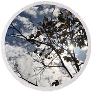 Autumn Yellow Back-lit Tree Branch Round Beach Towel